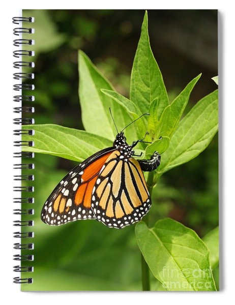 Monarch Egg Time Spiral Notebook