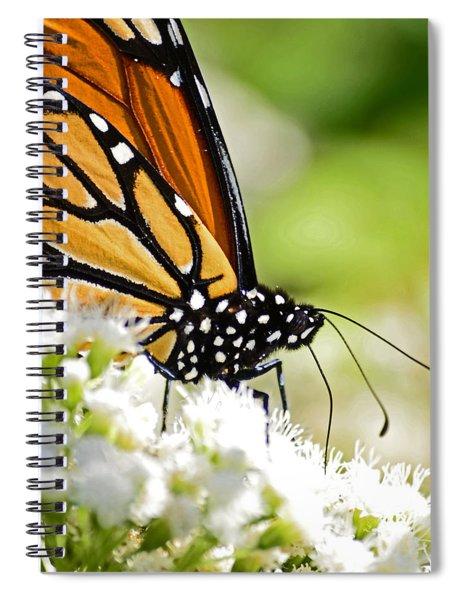 Monarch Moment Spiral Notebook