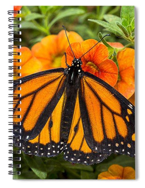 Monarch Resting Spiral Notebook