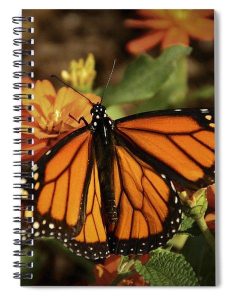 Monarch Spotlight. Spiral Notebook