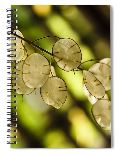 Money On Trees Spiral Notebook