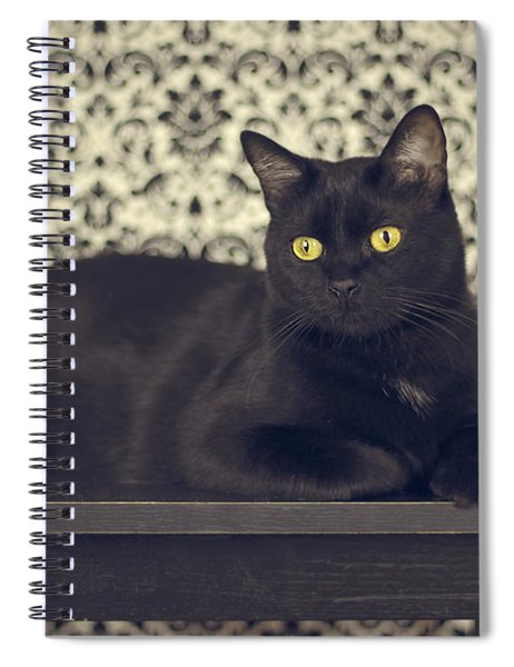 Mongo The Robust Cat Spiral Notebook