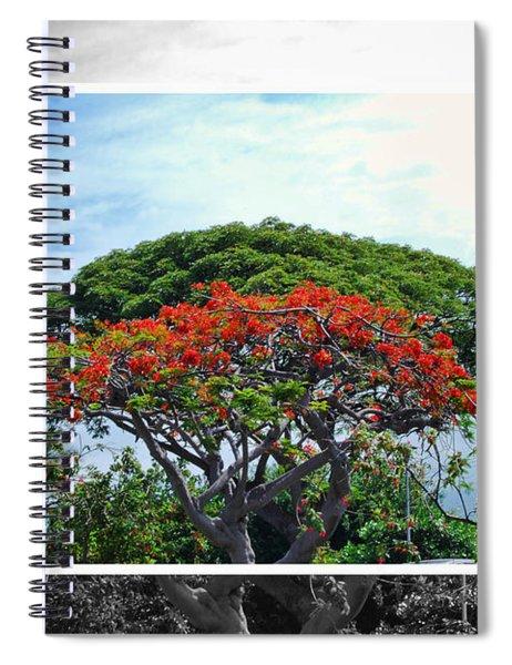 Monkey Pod Trees - Kona Hawaii Spiral Notebook