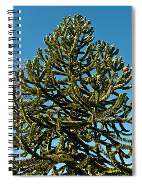 Monkey Puzzle Tree E Spiral Notebook