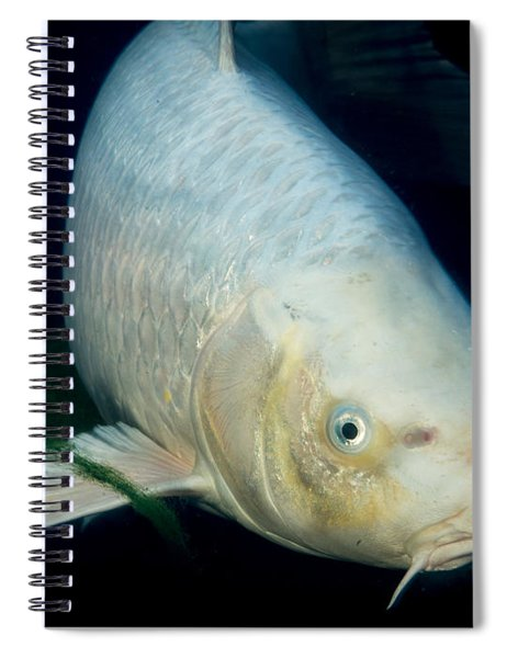 Monster White Koi Face To Face Spiral Notebook