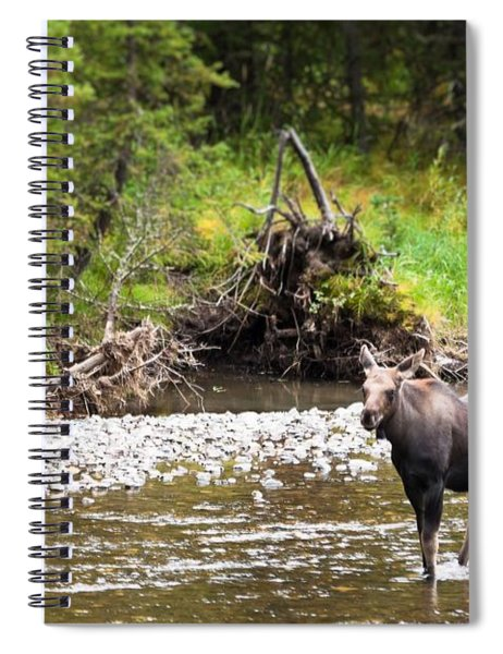 Moose In Yellowstone National Park   Spiral Notebook
