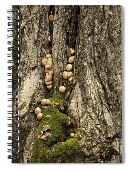 Moss-shrooms On A Tree Spiral Notebook