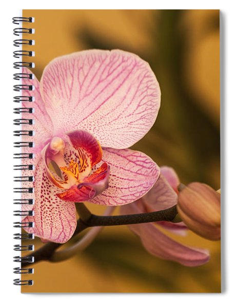 Spiral Notebook featuring the photograph Moth Orchid by Ed Gleichman