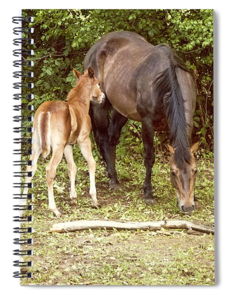 Mother And Foal Spiral Notebook