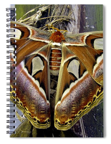 Atlas Moth Spiral Notebook