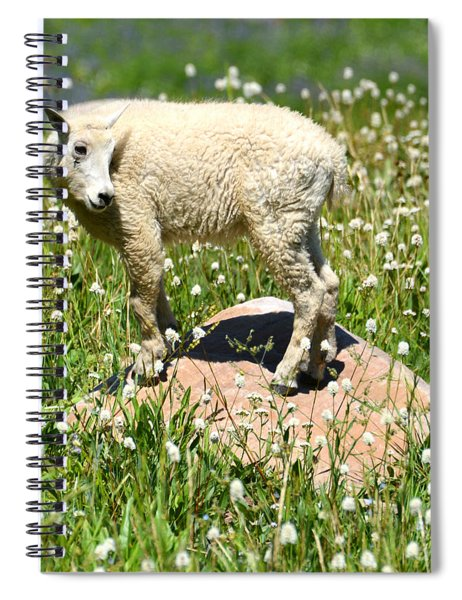 Mountain Goat Kid Among Wildflowers Spiral Notebook
