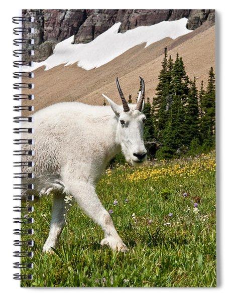 Mountain Goat Walking Beneath A Talus Slope Spiral Notebook