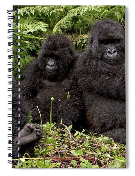 Mountain Gorilla Susa Group Spiral Notebook
