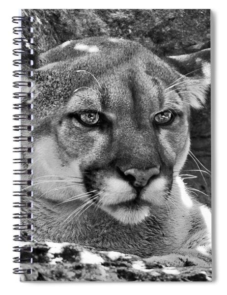 Mountain Lion Bergen County Zoo Spiral Notebook