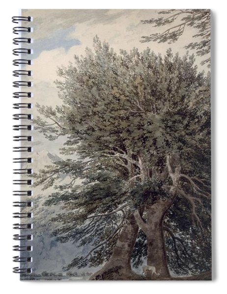 Mountainous Landscape With Beech Trees Spiral Notebook