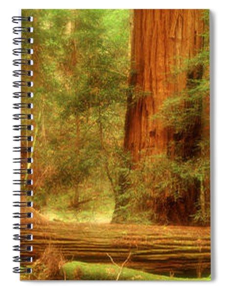 Muir Woods, Trees, National Park Spiral Notebook