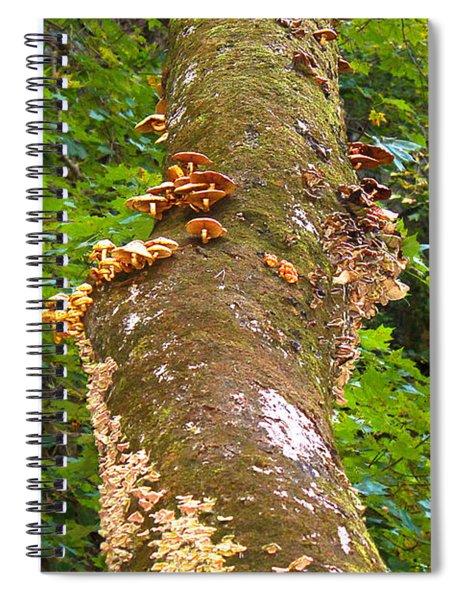 Mushroom's Kingdom Spiral Notebook