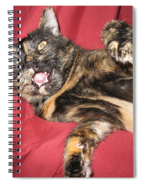 My Funny Cat Spiral Notebook