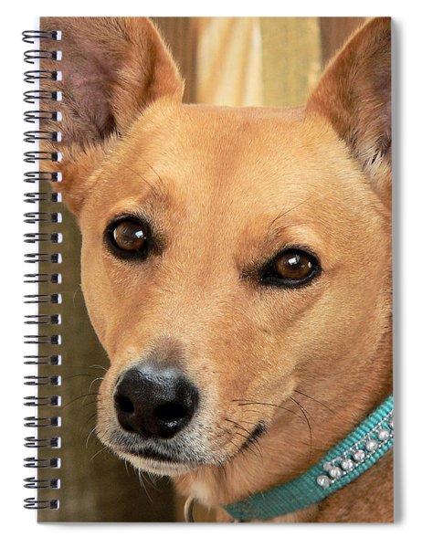 Dog - Cookie One Spiral Notebook