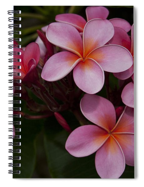 Na Lei Pua Melia O Wailua - Pink Tropical Plumeria Hawaii Spiral Notebook