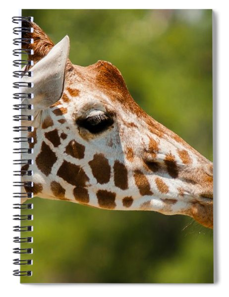 Spiral Notebook featuring the photograph Nana Nana Boo Boo by Robert L Jackson