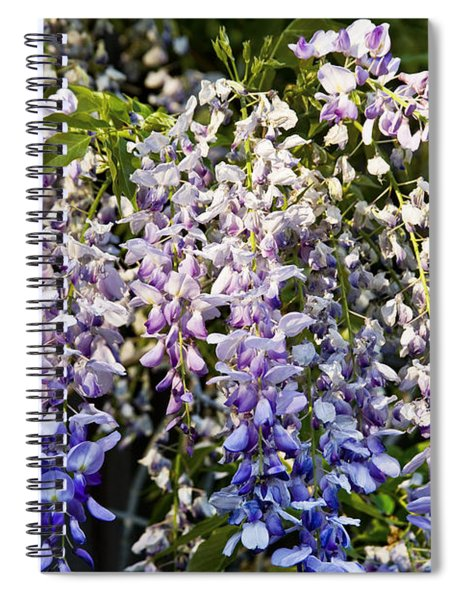 Nancys Wisteria 3 Spiral Notebook