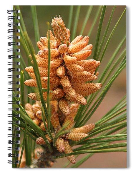 Nascent Pinecone Spiral Notebook