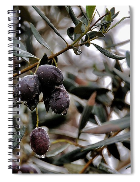 Nazareth Olives Israel Spiral Notebook