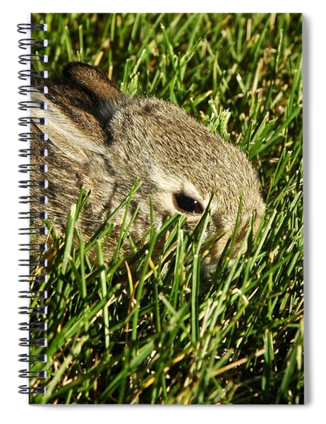 The Baby Cottontail Spiral Notebook