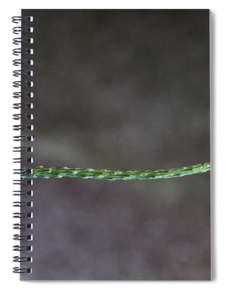 Spiral Notebook featuring the photograph Butterfly - Tailed Jay II by Patti Deters
