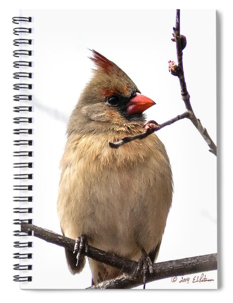 Spiral Notebook featuring the photograph Northern Cardinal In Spring by Edward Peterson