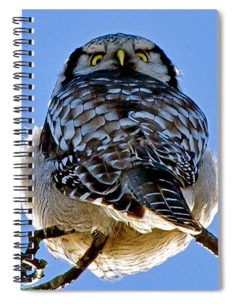 Northern Hawk Owl Looks Around Spiral Notebook