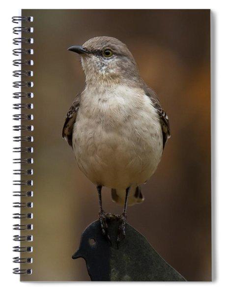 Spiral Notebook featuring the photograph Northern Mockingbird by Robert L Jackson
