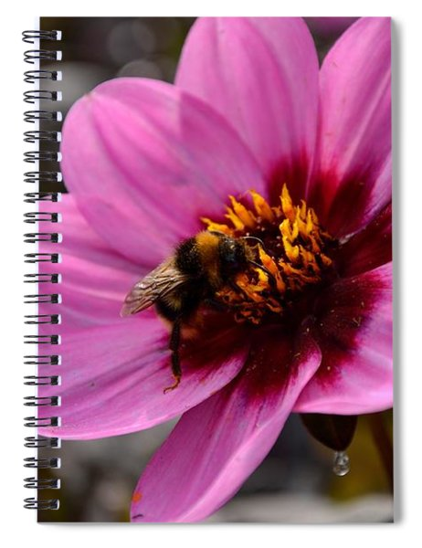 Nosy Bumble Bee Spiral Notebook