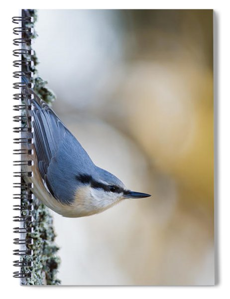 Nuthatch In The Classical Position Spiral Notebook