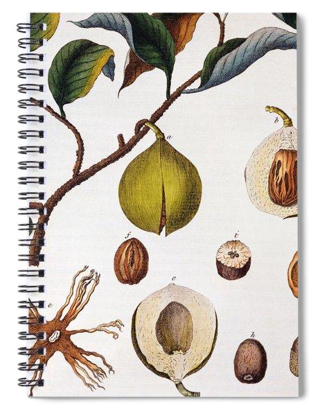 Nutmeg Myrsitica Fragrans Spiral Notebook