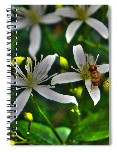 Odd Beauty Spiral Notebook
