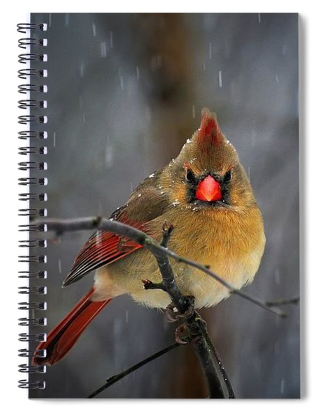 Oh No Not Again Spiral Notebook