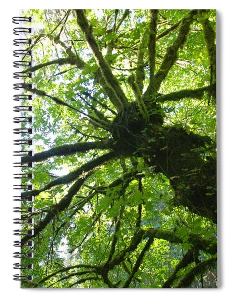 Old Growth Tree In Forest Spiral Notebook