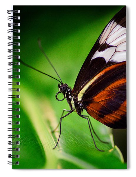 Spiral Notebook featuring the photograph On The Wings Of Beauty by Garvin Hunter