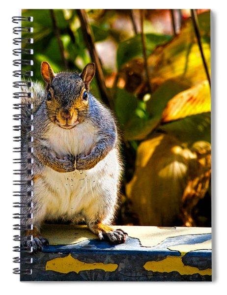 One Gray Squirrel Spiral Notebook