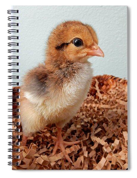 Orange Chick Spiral Notebook
