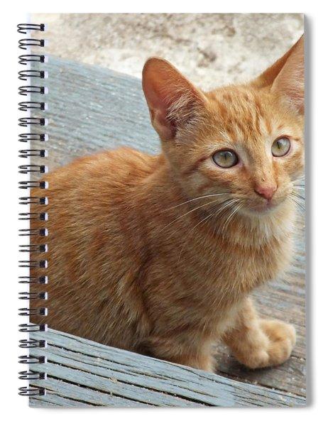 Orange Kitten 2 At The Front Porch Spiral Notebook