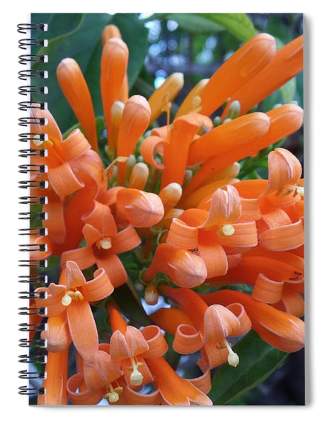 Orange Petals Spiral Notebook