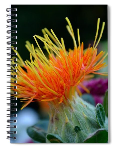 Spiral Notebook featuring the photograph Orange Safflower by Scott Lyons