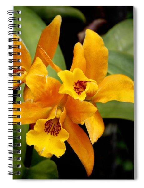 Orange Spotted Lip Cattleya Orchid Spiral Notebook