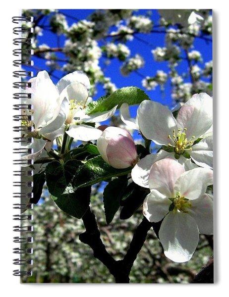 Orchard Ovation Spiral Notebook