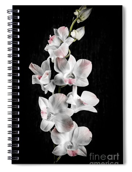 Orchid Flowers On Black Spiral Notebook