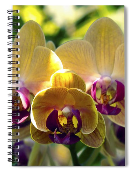 Orchid Study Viii Spiral Notebook