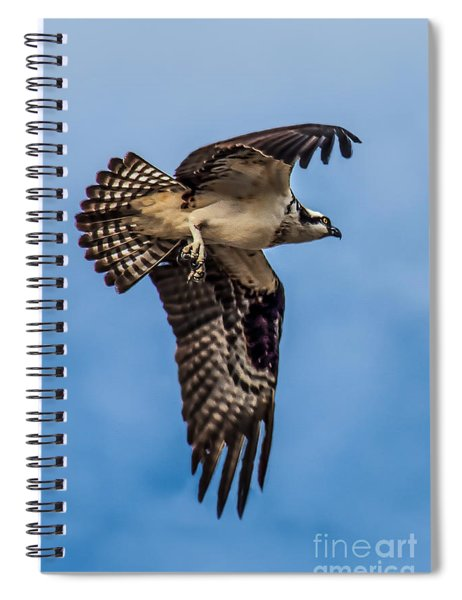 Osprey Flying Away Spiral Notebook